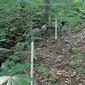 Forests lose essential nitrogen in surprising way