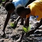 New rice initiative expands in Haiti