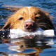 Scientists dive into the mystery of the dog paddle