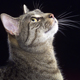Study: genetic detective work uncovers deadly cat virus trigger